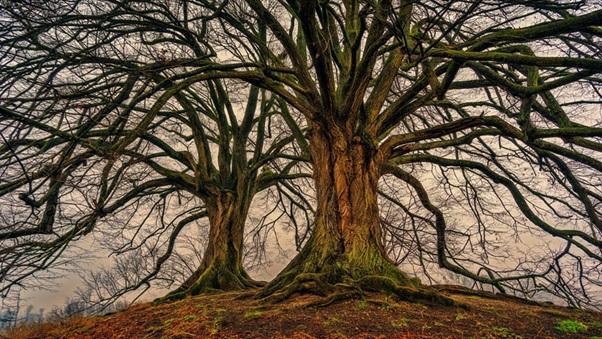 Drevo a stromy